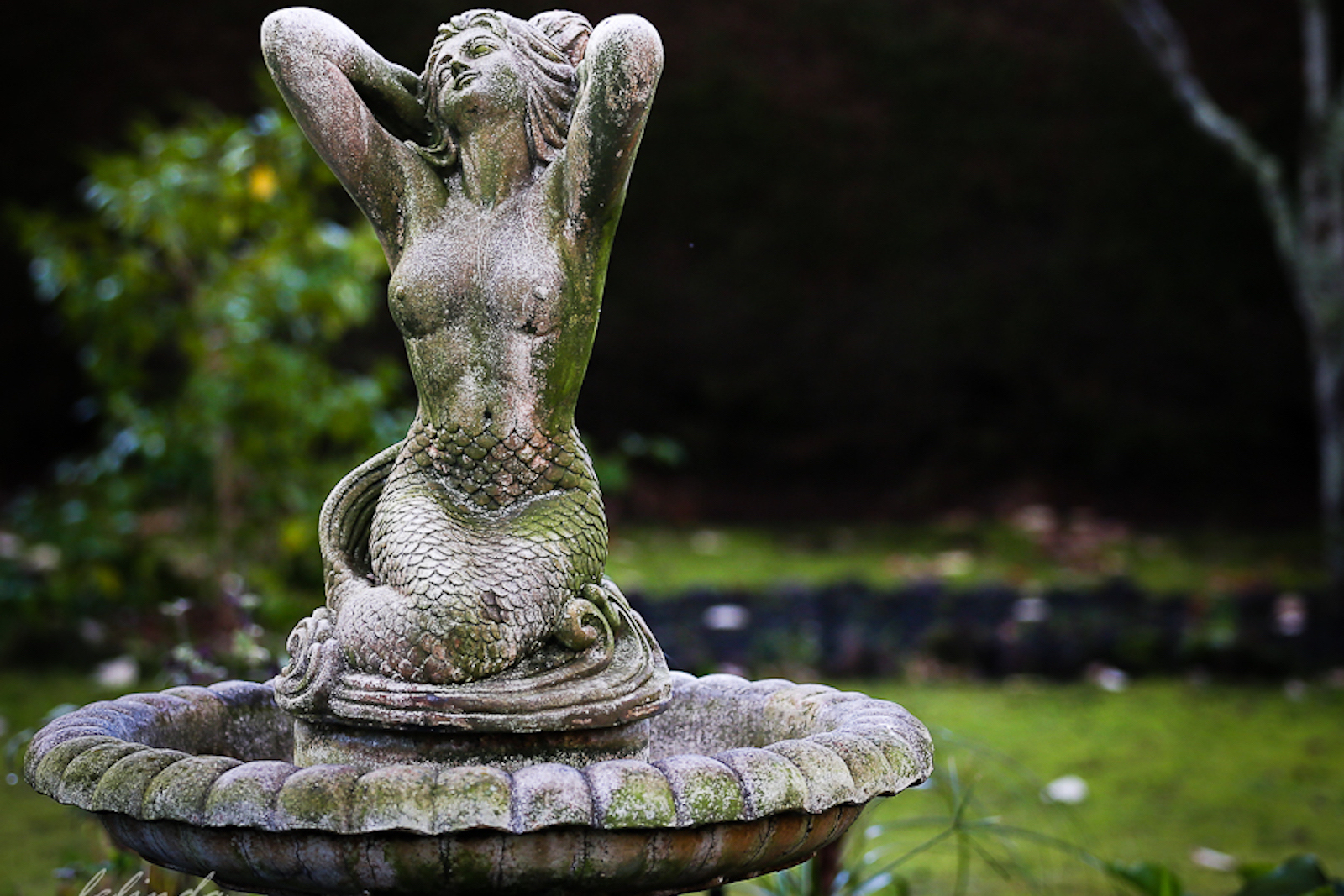 Heytesbury_House_Cobden_Bird_Bath